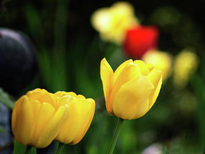Photograph - Celebrating Spring Flowers by Garvin Hunter