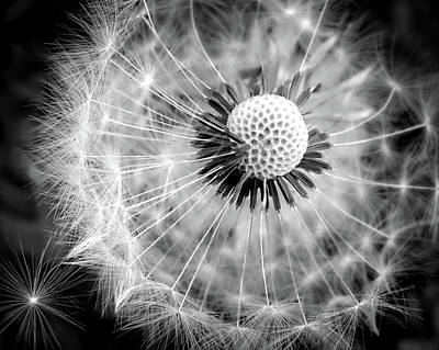 For The Kids Photograph - Celebration Of Nature In Black And White by Karen Wiles