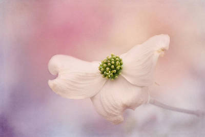 Photograph - Celebration Of Spring by Kim Hojnacki