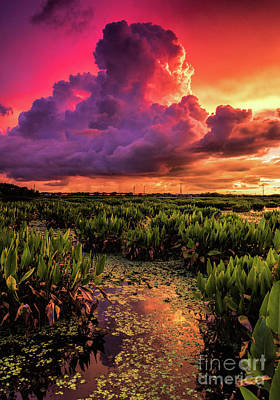 Photograph - Celery Fields Sunset by Damon Powers