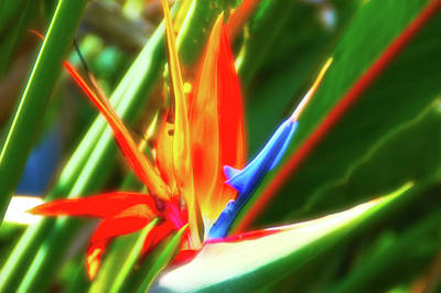 Photograph - Celestial Skies Bird Of Paradise by Aimee L Maher Photography and Art Visit ALMGallerydotcom