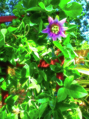 Photograph - Celestial Skies Passion Flower 2 by Aimee L Maher Photography and Art Visit ALMGallerydotcom