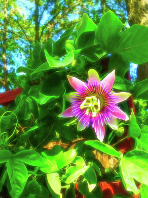 Sunshine Photograph - Celestial Skies Passion Flower 3 by Aimee L Maher Photography and Art Visit ALMGallerydotcom