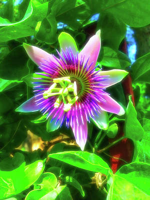 Photograph - Celestial Skies Passion Flower 4 by Aimee L Maher ALM GALLERY