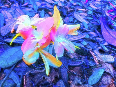 Photograph - Celestial Skies Pastel Petals by Aimee L Maher Photography and Art Visit ALMGallerydotcom