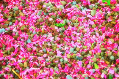 Photograph - Celestial Skies Pink Petals On Stones by Aimee L Maher Photography and Art Visit ALMGallerydotcom