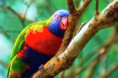 Photograph - Celestial Skies Resting Lorikeet by Aimee L Maher Photography and Art Visit ALMGallerydotcom