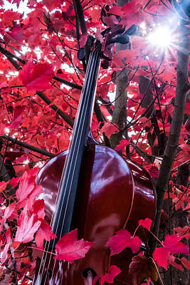 Photograph - Cello In A Maple Tree by Mick Anderson