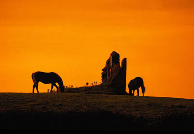 Celtic Horses At Sunset Art Print by Carl Purcell