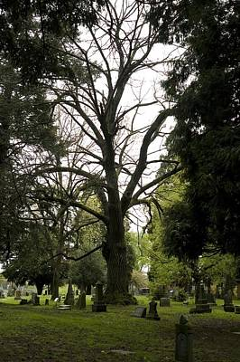 Photograph - Cemetery Trees 2 by Sara Stevenson