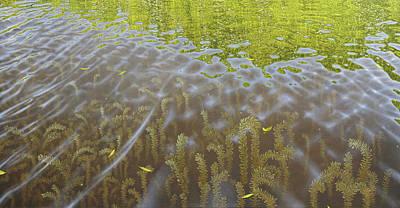 Painting - Cenaiko Lake by Timothy Jones