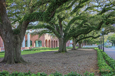 Photograph - Centennial Oaks by Gregory Daley  PPSA