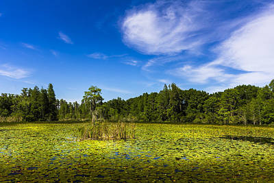 Florida Flowers Photograph - Center Cypress by Marvin Spates