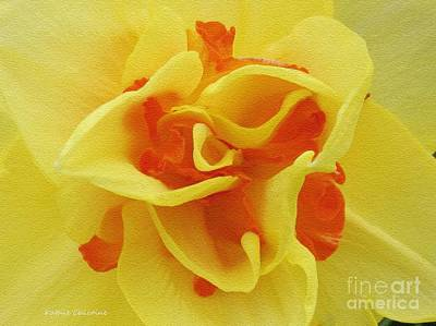 Photograph - Center Folds by Kathie Chicoine