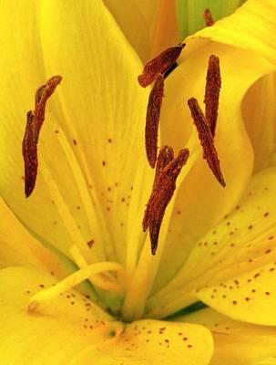 Photograph - Center Of A Lily by Rhonda Barrett