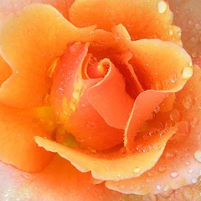 Center Of Orange Rose Original by John Lautermilch