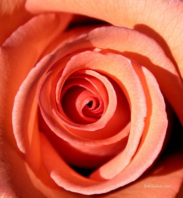 Art Print featuring the photograph Center Of The Peach Rose by Barbara Chichester