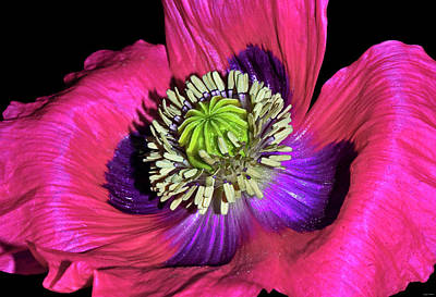 Photograph - Centerpiece - Poppy 020 by George Bostian