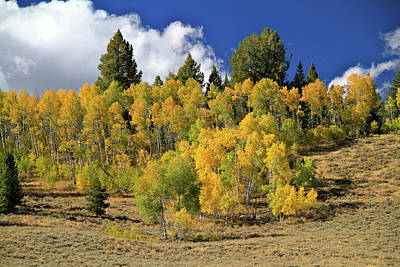 Photograph - Central Idaho Aspens by Ed  Riche