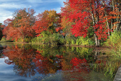 Photograph - Central Massachusetts Fall Foliage Brillance by Juergen Roth