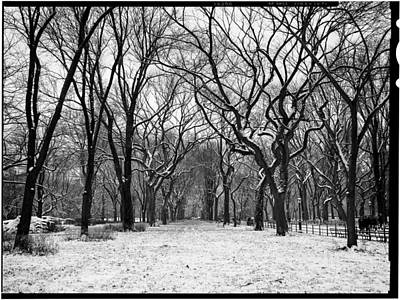 Photograph - Central Park 1 by Wayne Gill