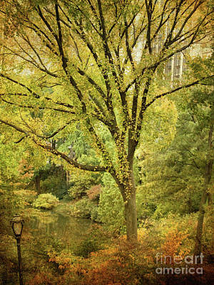 Photograph - Central Park In Autumn Texture 5 by Dorothy Lee