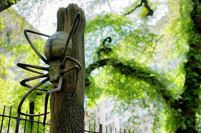 Photograph - Central Park Spider by Mike Sperduto