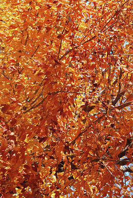 Autumn Landscape Mixed Media - Central Park Tree IIi by Marilu Windvand