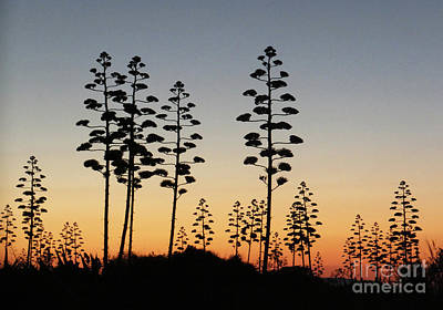 Photograph - Century In Silhouette by Mary Attard