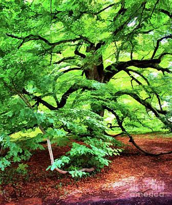 Digital Art - Century Oak Tree by Judy Palkimas