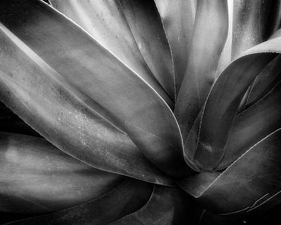 Photograph - Century Plant by Alan Raasch