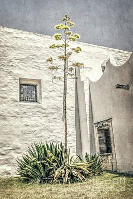 Photograph - Century Plant by Lynn Sprowl