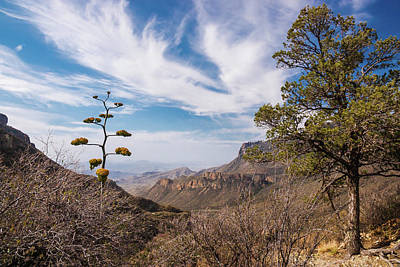 Photograph - Century Plant Overlook At Big Bend by Lon Dittrick