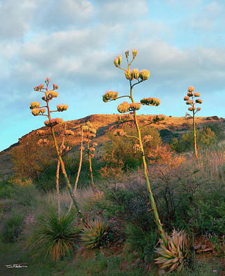 Photograph - Century Plant by Tim Fitzharris