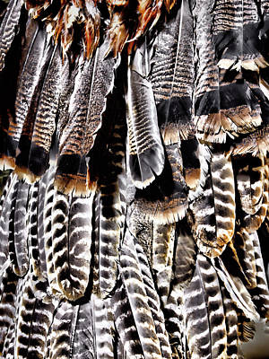 Photograph - Ceremonial Feathers by Ann Powell