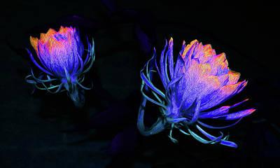 Epiphyllum Oxypetalum Photograph - Cereus Color Burst by Belinda Nagy