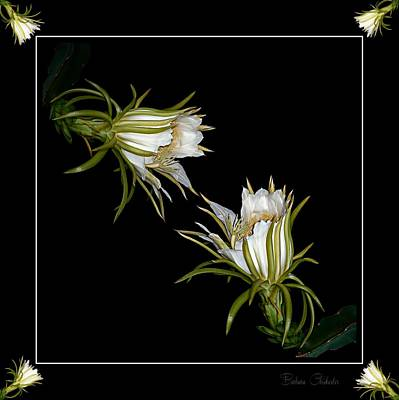 Abstract Photograph - Cereus Display by Barbara Chichester
