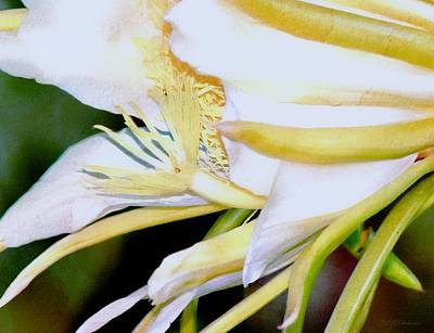 Night Blooming Cereus Painting - Cereus Tropicale by Barbara Chichester
