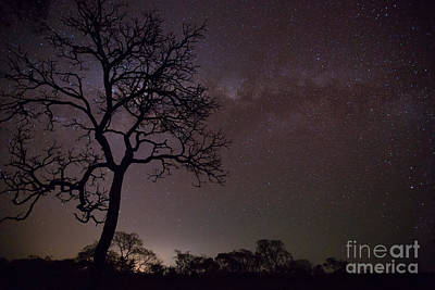 Photograph - Cerrado By Night by Gabor Pozsgai