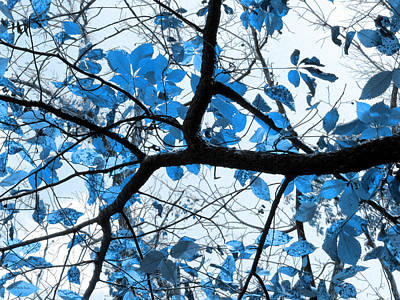 Invert Color Photograph - Cerulean Leaves by Shawna Rowe