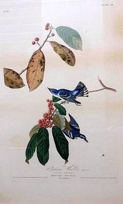 Cerulean Warbler Azure Warbler Original by John James La Forest Audubon