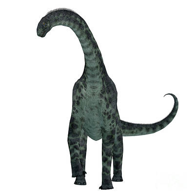 Animals Royalty-Free and Rights-Managed Images - Cetiosaurus Dinosaur on White by Corey Ford