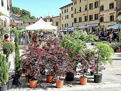 Photograph - Cetona Annual Flower Market by Dorothy Berry-Lound