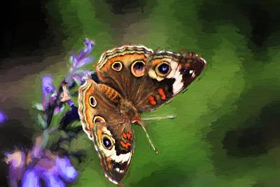 Photograph - Cezanne Common Buckeye Butterfly  by Carol Montoya