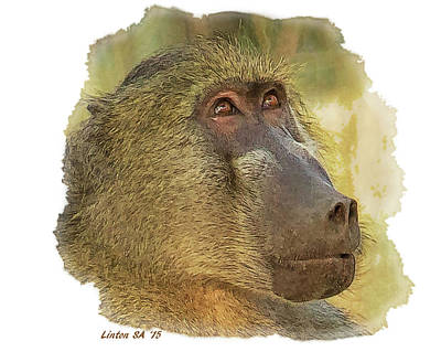 Digital Art - Chacma Baboon 6 by Larry Linton