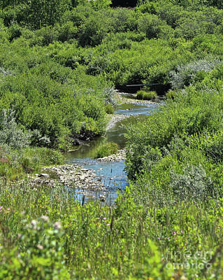Photograph - Chaffen Creek by Ann E Robson