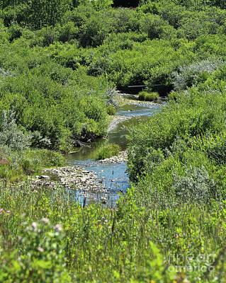 Photograph - Chaffen Creek by Ann E Robson