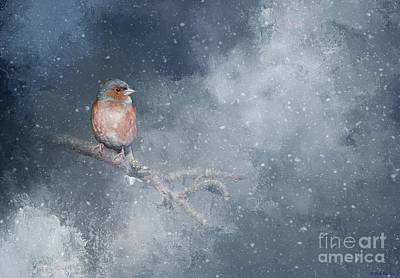 Chaffinch On A Cold Winter Day Art Print by Eva Lechner