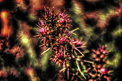 Photograph - Chain Cholla About To Bloom by Roger Passman