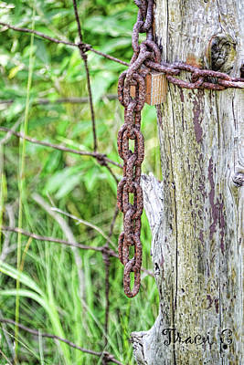 Photograph - Chain Reaction by Traci Cottingham